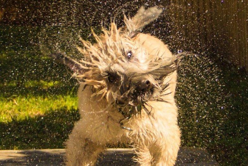 Hurricane Training: Potty Your Dog On Leash
