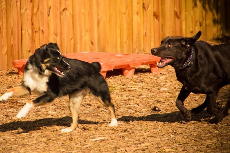 Why Using a Dog Daycare Service is Beneficial to You and Your Dog