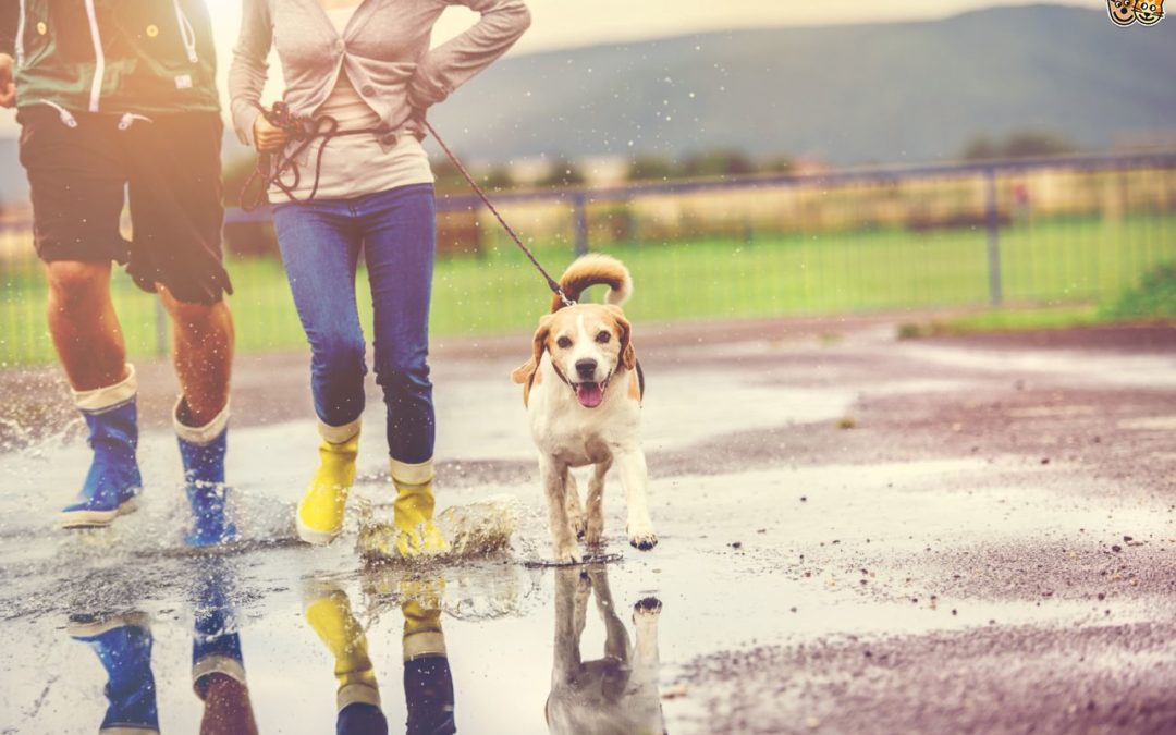 Hurricane Training: How to Teach Your Dog To Potty On Leash
