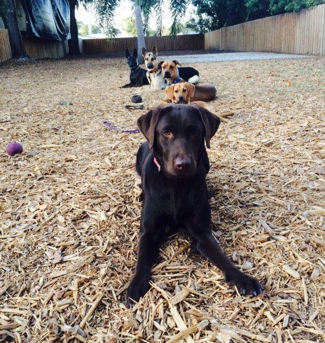 Recent Graduates: Full Service Dog Training in Pinellas Park, FL