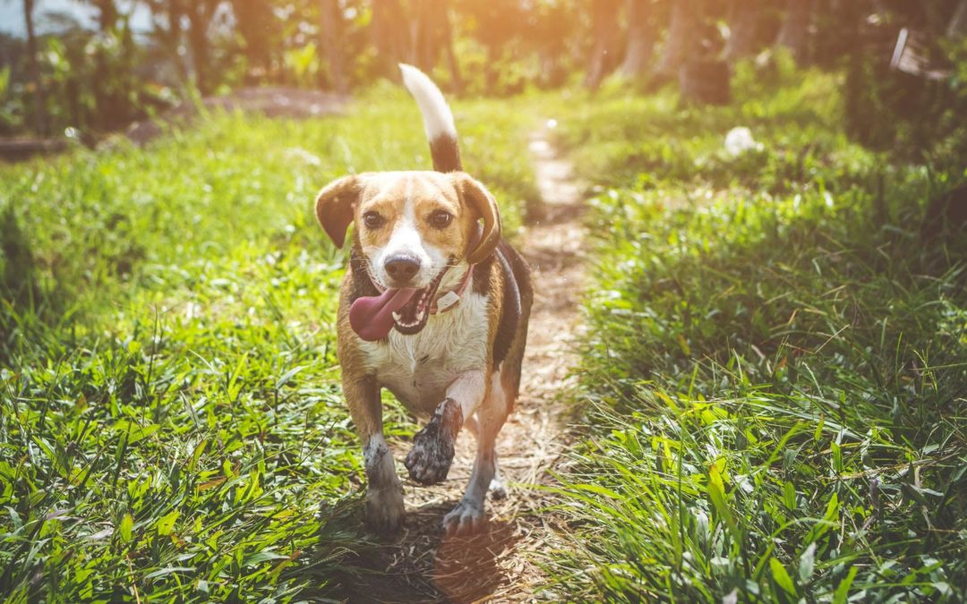 8 Tips To Get Your Dog To Enjoy Time Outside