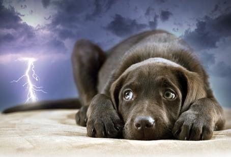 Dealing With Storm Anxiety in Dogs