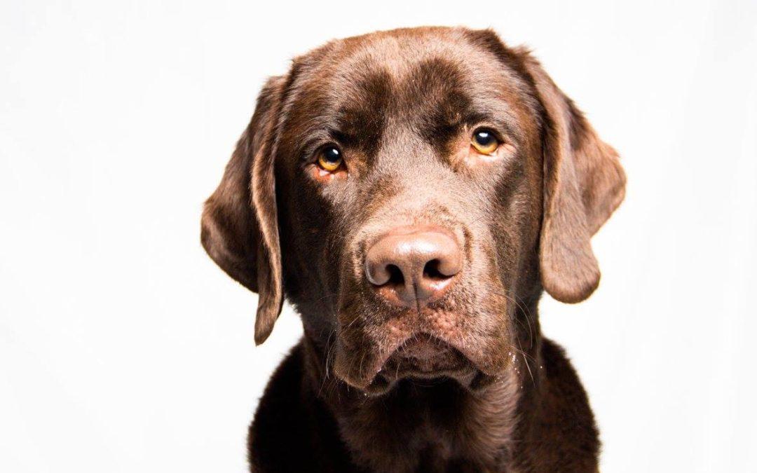 Service Dog Training | The Doghouse LLC